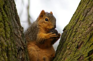 Beady eyed squirrel - a Google image.