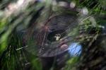 09- Spider web 1